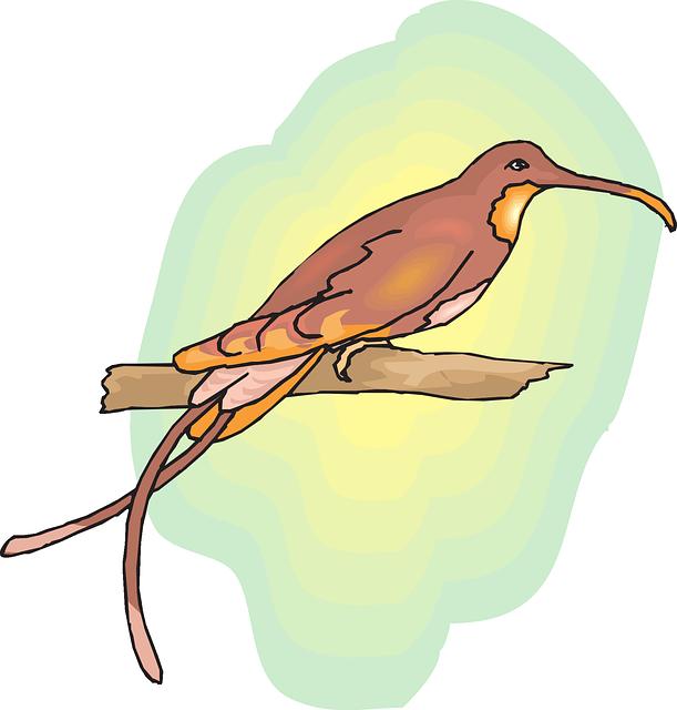 Mengenal Burung Cendrawasih Papua