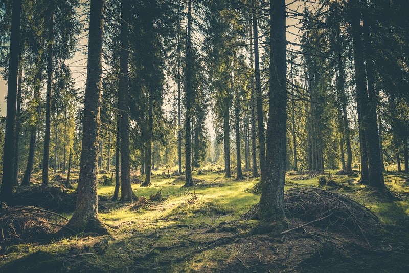Seribu satu manfaat Hutan