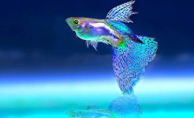 7 Ikan Yang Cocok Untuk Aquascapedan Mudah Dipelihara untuk Pemula