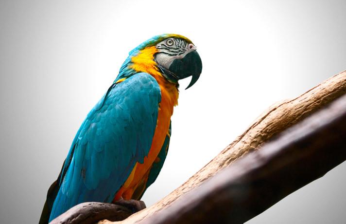 Worst Pet Bird Species for Kids